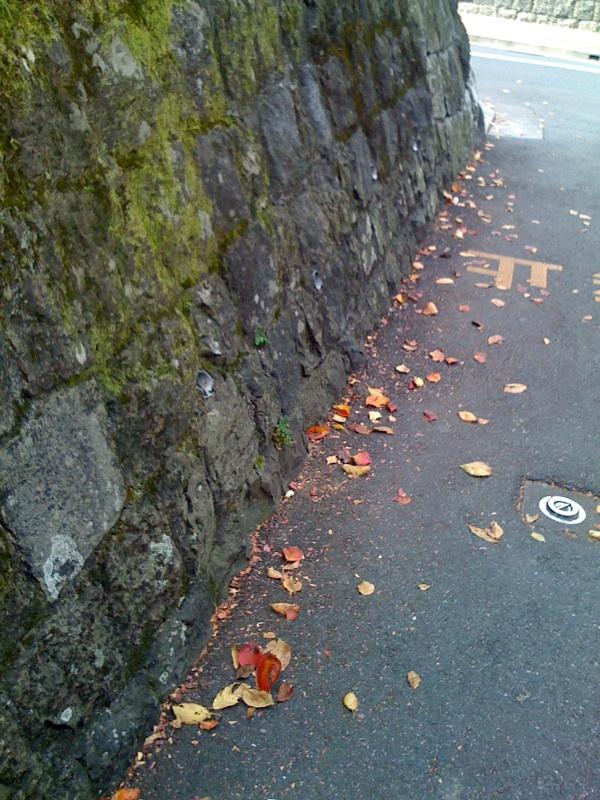 まだ街中はチラチラ紅葉だね。