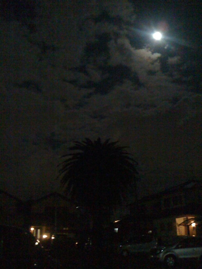 月が綺麗な夜!