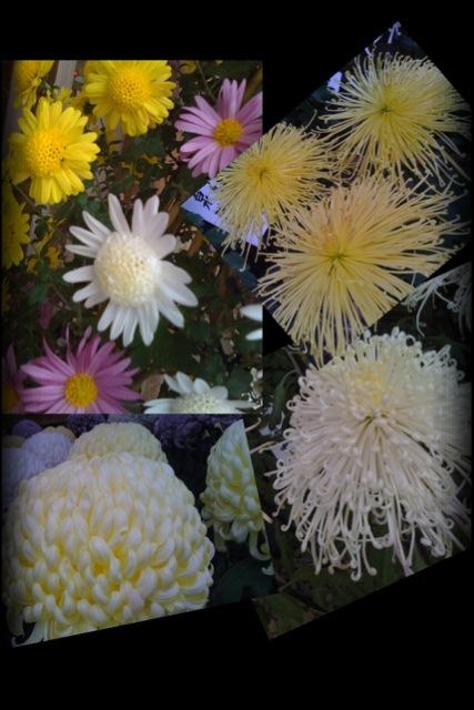 季節の花 日本の花ですね。