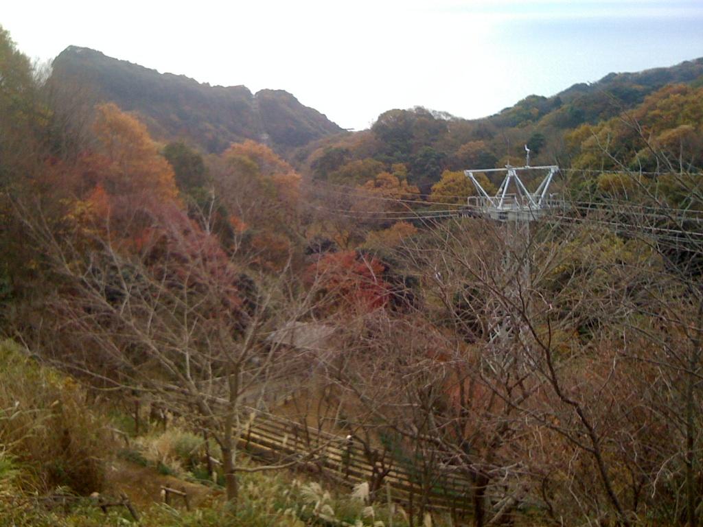 紅葉の日本平