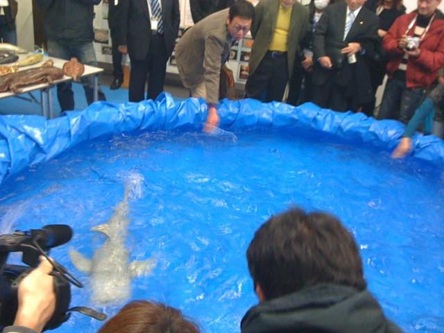東海大学海洋学部の海の環境シンポジウムに行って来ました。